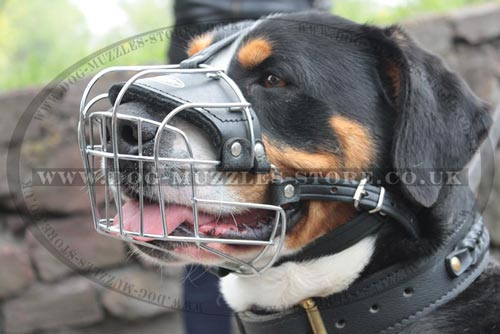 Padded Dog Muzzle Basket for Swiss Mountain Dog