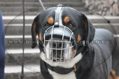 Dog Muzzle Basket Type