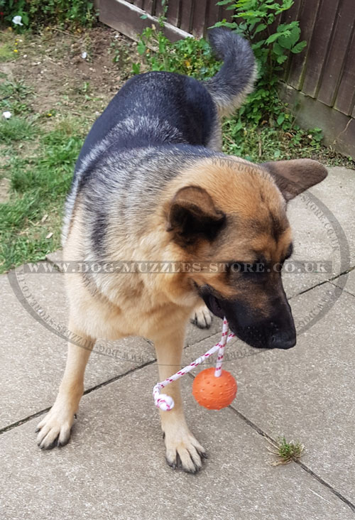solid rubber ball for German Shepherd training