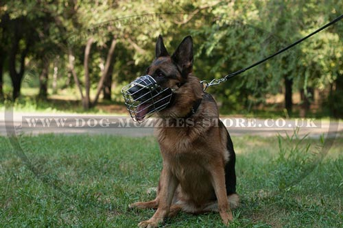 Dog Walking with a Wire Dog Muzzle