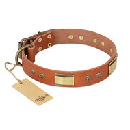 New Decorated Dog Collar FDT Artisan 'Enchanting Spectacle'