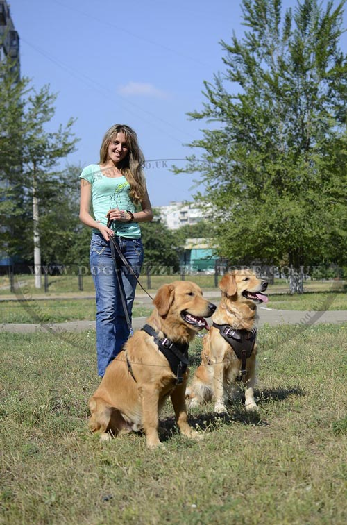 Exciting Dog Training Process