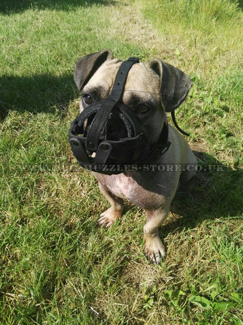 buy french bulldog basket muzzle UK