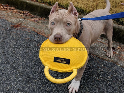 buy dog bite tug for Pitbull