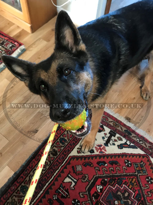 Solid Rubber Ball for Dog Training
