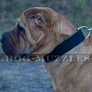 Strong and Light Nylon Dog Collar with Metal Buckle for Shar Pei