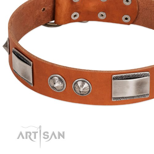 metal studded dog collar FDT Artisan