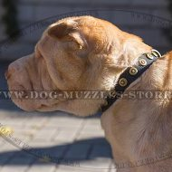 1 In Handmade Leather Dog Collar for Shar Pei