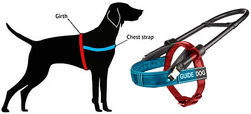 guide dog harness size