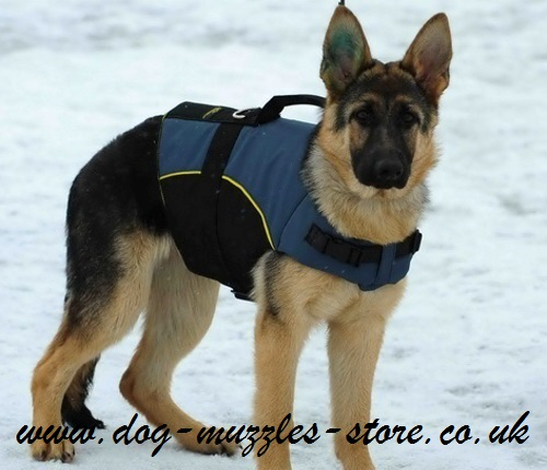 warm dog coat with handle support
