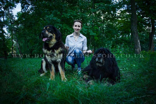 Large Dog Breeds Commands Training