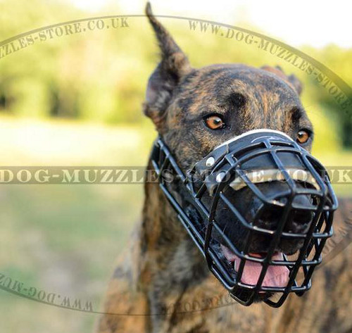 Rubber Dog Muzzle for All Weather Use | Great Dane Muzzle