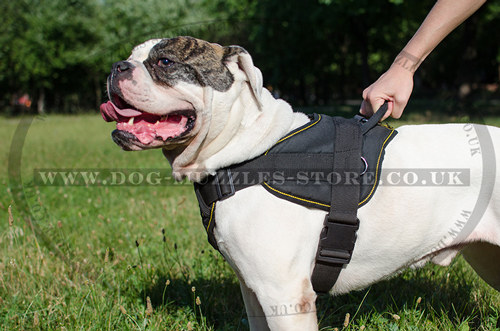 Nylon Dog Harness For American Bulldog