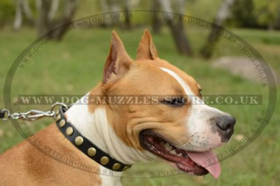 """Celestial Sphere"" Brass Studded Dog Collar For Staffy 1"" Width"