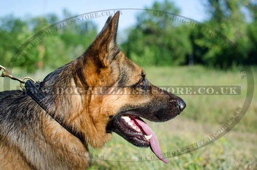 Buy Now Strong German Shepherd Collar with Braided Design