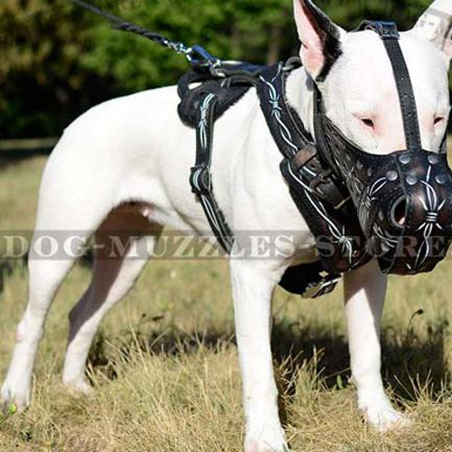 Police Dog Training Muzzle | English Bull Terrier Muzzle UK