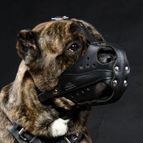 Police Dog Muzzle for Cane Corso and Large Dog Training