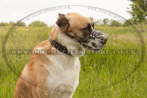 Bestseller Dog Muzzle for Central Asian Shepherd Dog