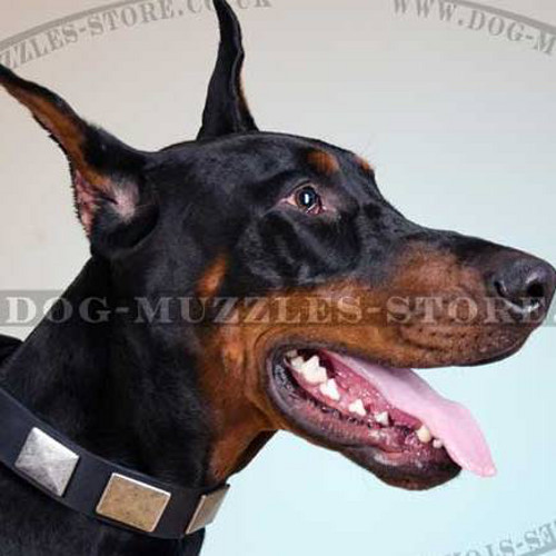 Designer Dog Collar with Nickel-Plated Square Studs