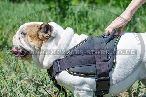 English Bulldog Dog Harness | Comfortable Dog Training Harness