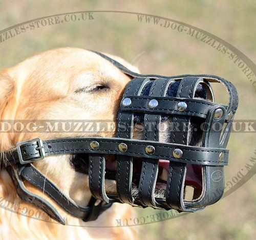 Royal Golden Retriever Muzzle with Soft Nappa Lining