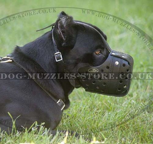 Cane Corsos K9 Dogs Muzzle for Military Service and Police Dogs
