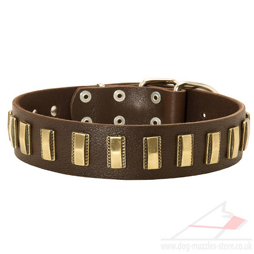 Giant Dog Collars Uk