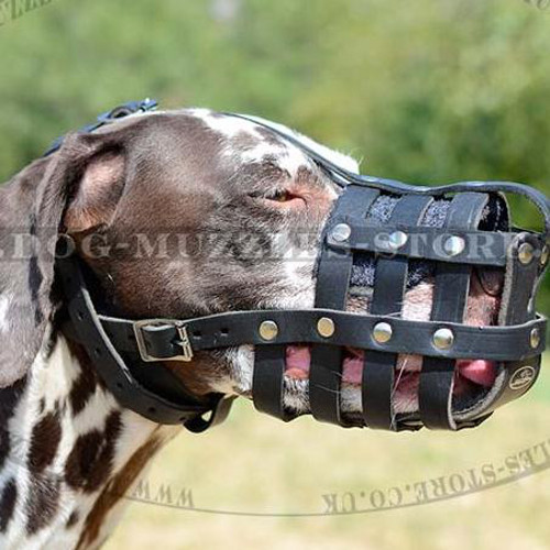 Leather Dog Muzzle for Dalmatian | Dalmatian Muzzle Bestseller