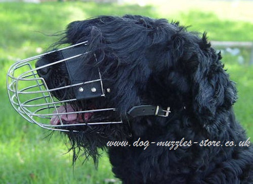 Muzzles for Dogs, Black Russian Terrier UK