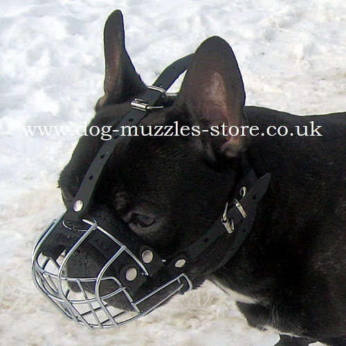 French Bulldog Muzzle UK from the Producer | Small Dog Muzzle - Click Image to Close