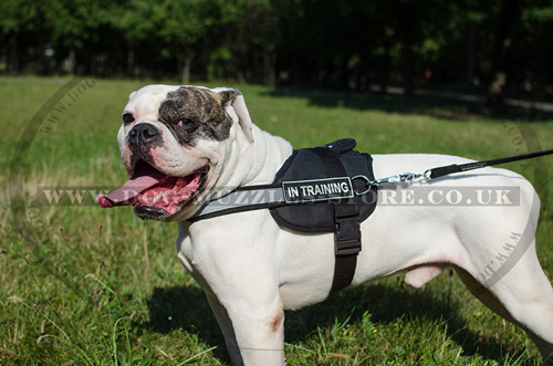 American Bulldog Dog Harness with Reflexive Strap