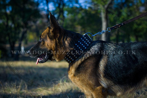 Best Studded Dog Collar for German Shepherd