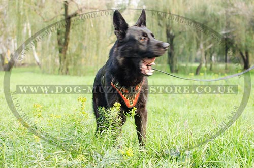 Luxury Dog Harness for German Shepherds for Sale from Producer