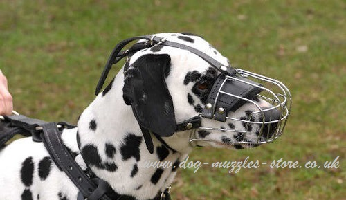 The Best Dog Muzzles UK for Dalmatian | Dalmatian Muzzle UK