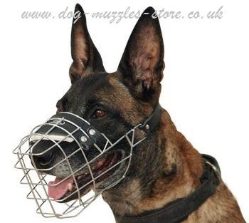 belgian shepherd malinois muzzle that allows drinking