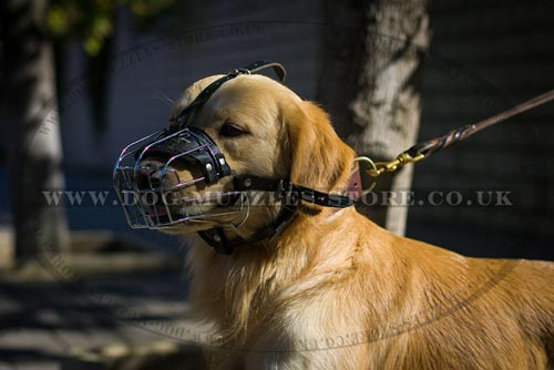 Soft Padded Basket Muzzle for Golden Retiriever Comfort