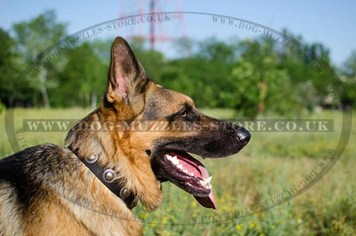 Nylon Dog Collar for German Shepherd | Strong Dog Collar