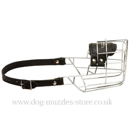 Best Dog Wire Muzzle for Dalmatian Dog Breed
