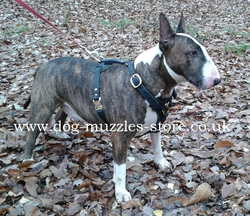 Best Outdoor Bull Terrier Leather Dog Harness