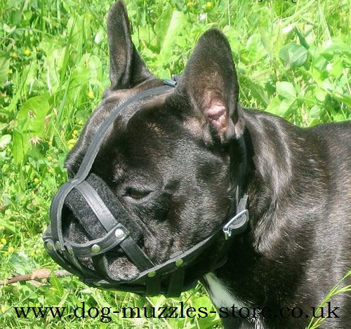 French Bulldog Muzzle UK Bestseller | Leather Dog Muzzle - Click Image to Close