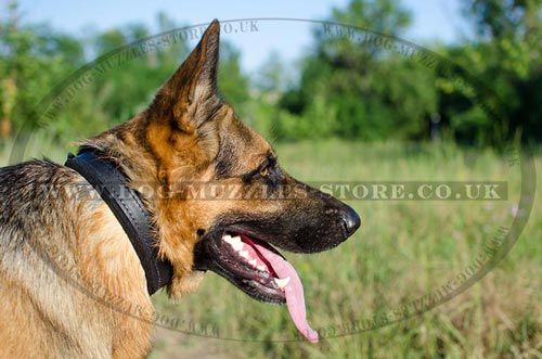 Soft Padded Dog Collar for German Shepherd 1 In Wide