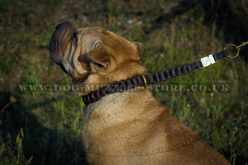 Shar Pei Training Dog Collar Choker - Leather Chain
