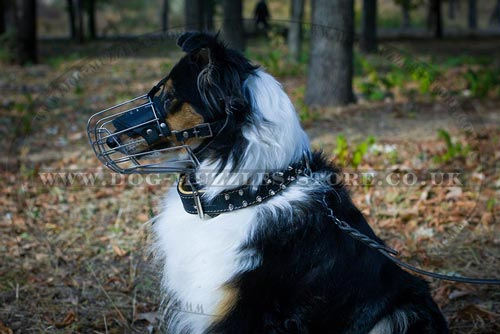 Bestseller Wire Basket Muzzle for Collie Dog Breed Snout Shape