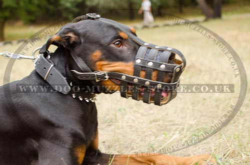 Nappa Padded Dog Muzzle for Doberman Snout Size