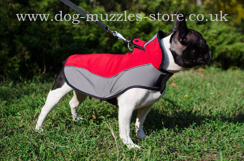 Buy French Bulldog Jacket to Walk Your Doggy in Any Weather!