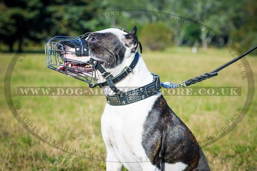 Pitbull Muzzle - Padded Wire Basket Design for Safety & Comfort