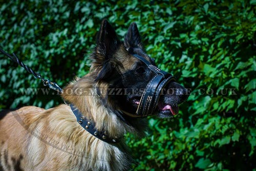 Choose New Leather Dog Muzzle Loop for Belgian Shepherd Tervuren