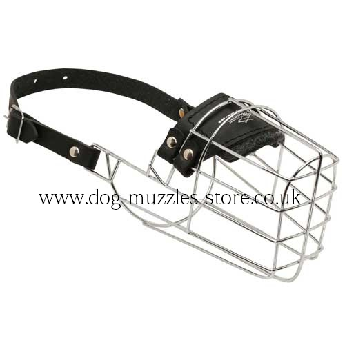 Best Choice of Collie Muzzle for Dogs Safety and Comfort