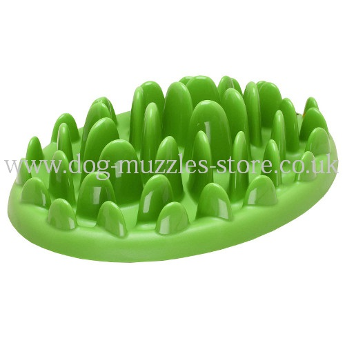 Interactive Dog Plate for Healthy Feeding for Medium/Large Dogs