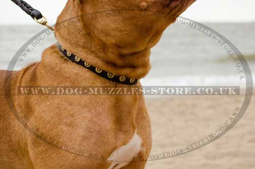 Dog Walking Collar for Dogue De Bordeaux Daily Use